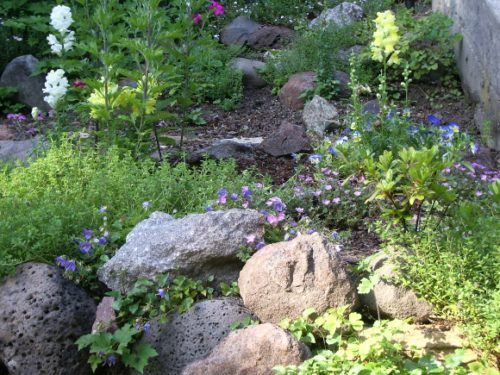 home rock garden with pastel flowers. photo by bf newhall