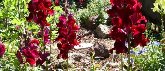 A Case of the Human Condition: I Want to Kill My Snapdragons