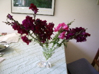 maroon snapdragons arranged awkwardly in an assymetrical glass vase. photo by bf newhall