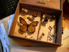 The remains of my high school insect collection. I got an A. C 2009 B.F. Newhall