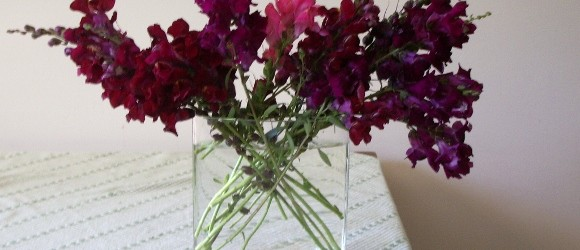What to Do With Those Ugly Snapdragons Now That They're (Almost) Dead?