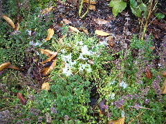 The snow still hadn't melted by noon in our shaded front yard. Will our sun-loving California-born plants survive?