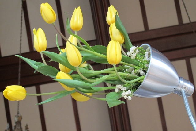 Yellow tulips sprouting like light from a desk lamp. Photo by Barbara Falconer Newhall
