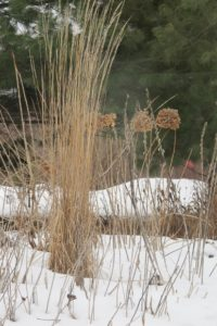 Last summer's plants are dry and brown against the snow in a Chanhassen, MN, garden. Photo by BF Newhall.