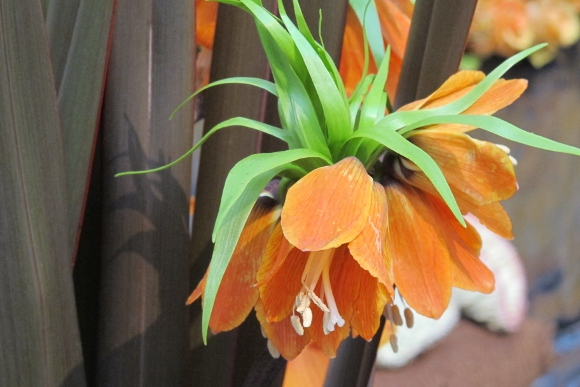 An exotic orange blossom from Bloomster's floral designer Kren P. Rasmussen. Photo by BF Newhall