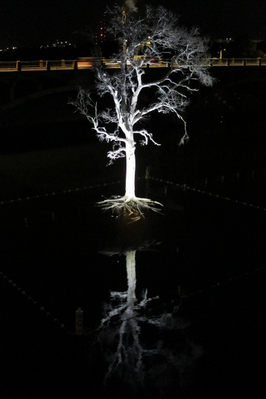 The Austin, TX, Ghost Tree, part of the Women and Their Work art installation, lit up at night over the lake. Photo by BF Newhall