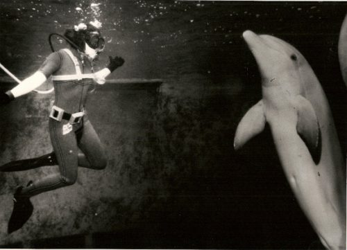 Barbara Falconer Newhall, with wetsuit, goggles and air tube, is face-to-face in the water with Spock, a bottle-nosed dolphin at Marine World, 1979. San Francisco Chronicle photo by John O'Hara