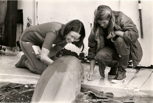 Marine World foto, Newspaper reporter Barbara Falconer Newhall in wet suit and Marine World trainer Dierdre Ballou in boots and rain coat with bottle-nosed dolphin Spock at edge of tank in 1979. Marine World photo.