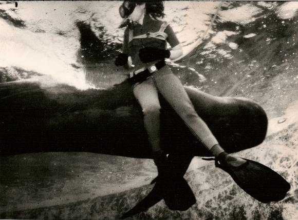 17-foot pilot whale Koko swimns close to reporter barbara falconer newhall at Marine World-Africa USA in 1979. San Francisco Chronicle photo by John O'Hara