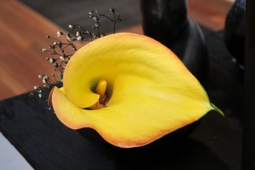 A yellow cala lily, a detail of floral design by Takako Ikebana Studio for Bouquets to Art at the de Young, Photo by BF Newhall