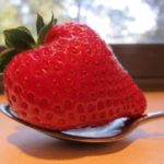 An oversized red strawberry is bigger than the bowl of the spoon it rests on. Photo by BF Newhall
