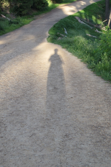 Writer and photographer Barbara Falconer Newhall casts a long shadow on the trail during a walk in a California woods. Photo by BF Newhall