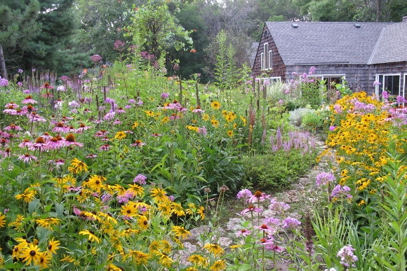 rudbeckia, echinacea and liatris grow along  garden walk between a shingled house and a woods near minneapolis. Photo by Barbara Newhall
