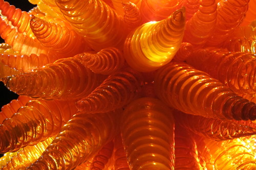 Glass chandelier by Dale Chihuly with orange conical shapes, at Chihuly Garden and Glass in Seattle.. Photo by Barbara Newhall