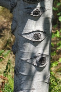 The trunk of a tree growing in the wooded area of the Olympic Sculpture Park, Seattle. Photo by Barbara Newhall