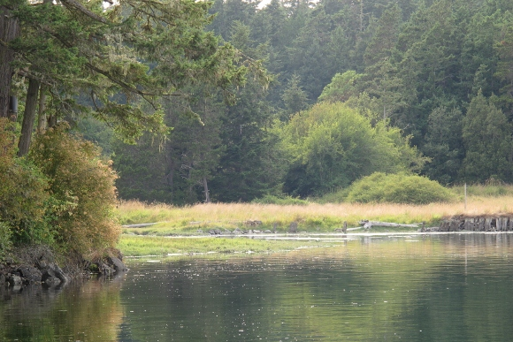 On the San Juan Islands, a variety of ecosystems exist side by side. Here a woods, a meadow alongside a bay shore. Photo by Barbara Newhall