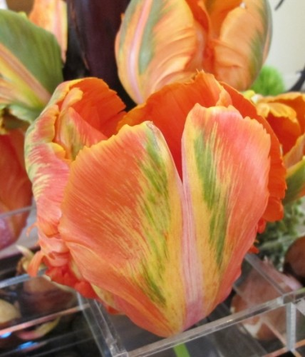 """Orange tulip with green and yellow streaks, detail of """"Fusion,"""" a floral design for the 2015 Tulip Exhibition at the Mountain View Cemetery, Oakland, CA. Design is by Kay Wolff of Kay Wolff Design, Berkeley. Photo by Barbara Newhall"""