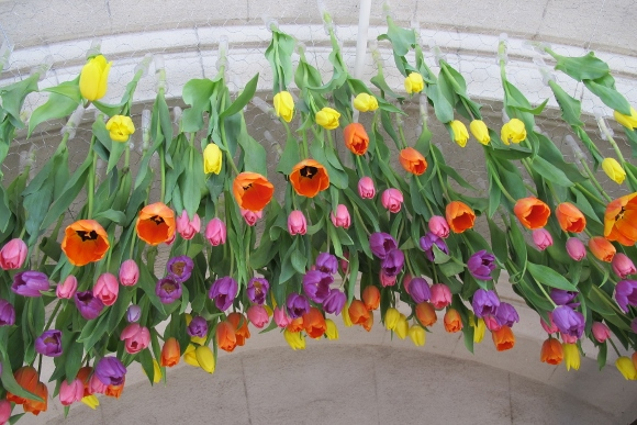 """Tulips of many colors hang upside down over the entrance to the Tower Chapel at Mountain View Cemetery,  Oakland, Calif., during its annual Tulip Exhibition. The design, titled """"Puddle Jumping,"""" is by the Merritt College Floral Design Department. Photo by Barbara Newhall"""