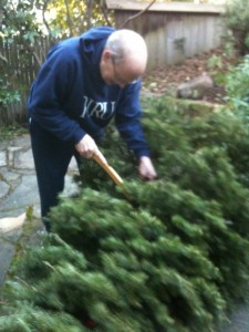 The politics of houswork. A man does the traditionally male job of trimming the bottom off a Christmas tree. Photo by Barbara Newhall