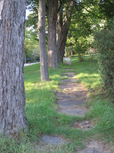 Sidewalk and trees in Pentwater, Michigan. Photo by Barbara Newhall