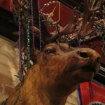 A stuffed moose or elk hangs on the wall of the Antler Bar, Pentwater, Michigan. Photo by Barbara Newhall