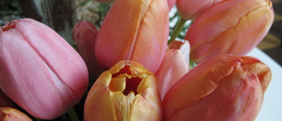 What a Tulip Can Do — If You Ask It