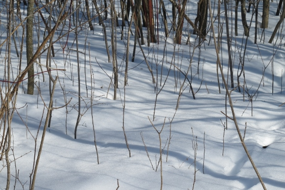 Tree shadows fall across the snow in a upper Midwestern woods in February. Photo by Barbara Newhall